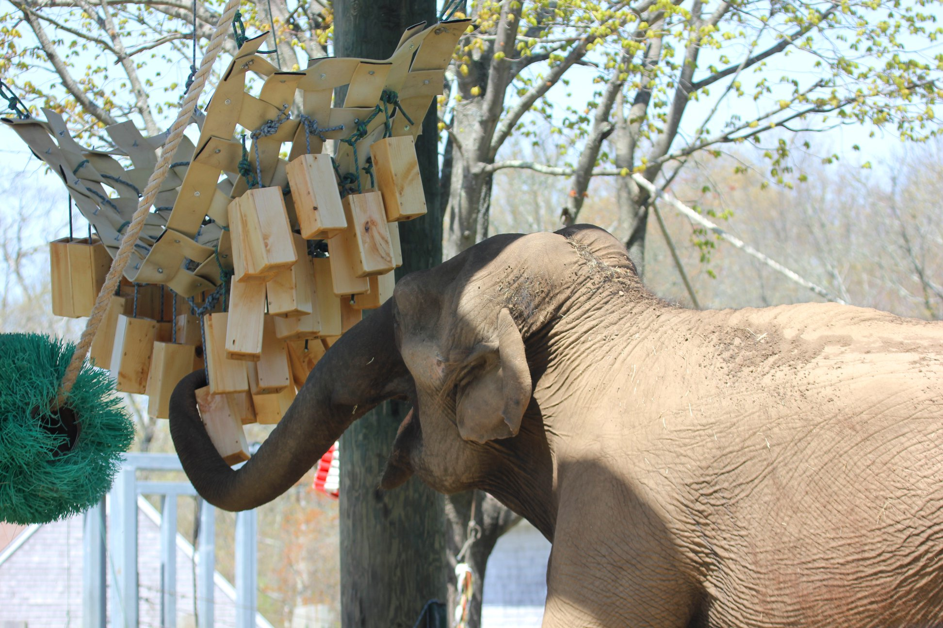 Toys for Elephants