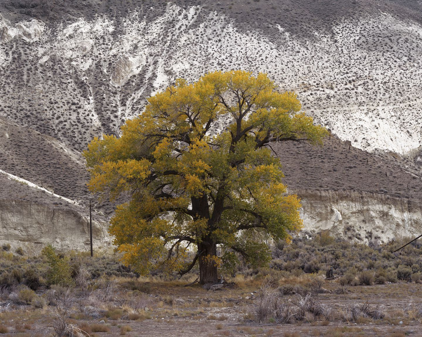 """Laura McPhee's """"Cottonwood Under Chalk Bluff by the Truckee River, Washoe County, Nevada."""""""