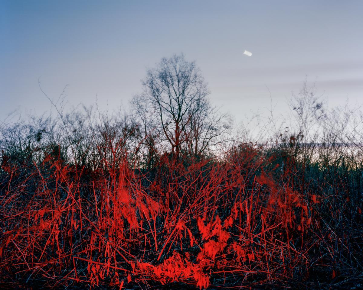 Red Dusk by Caterina Maina