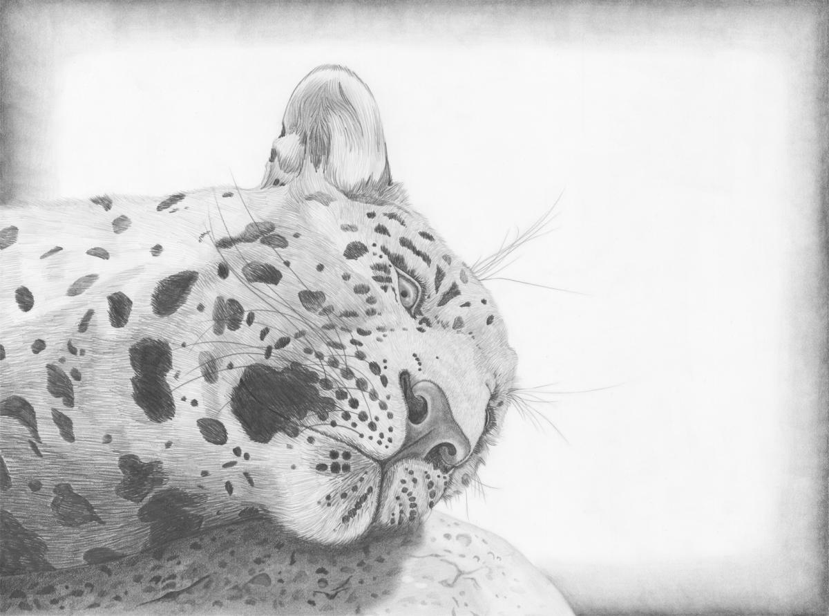 Illustration by Mikayla Dows