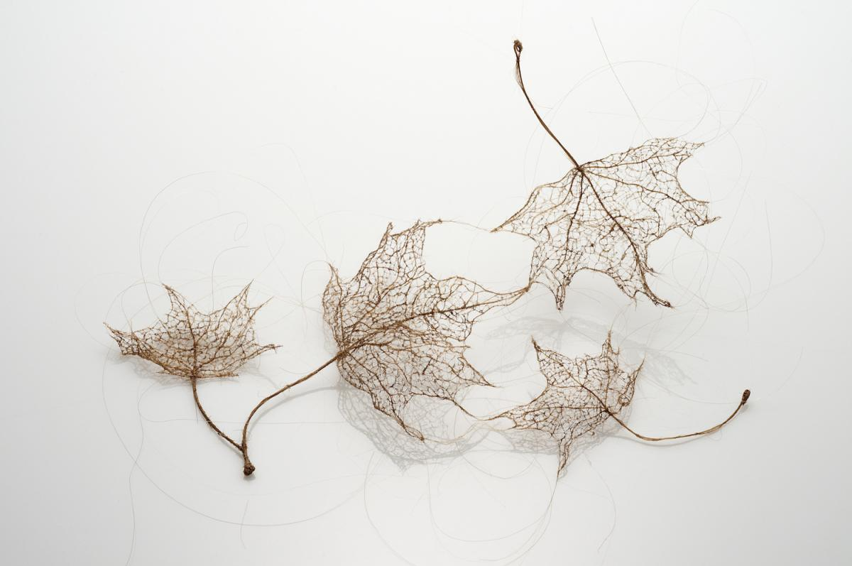 Leaves by Jenine Shereos