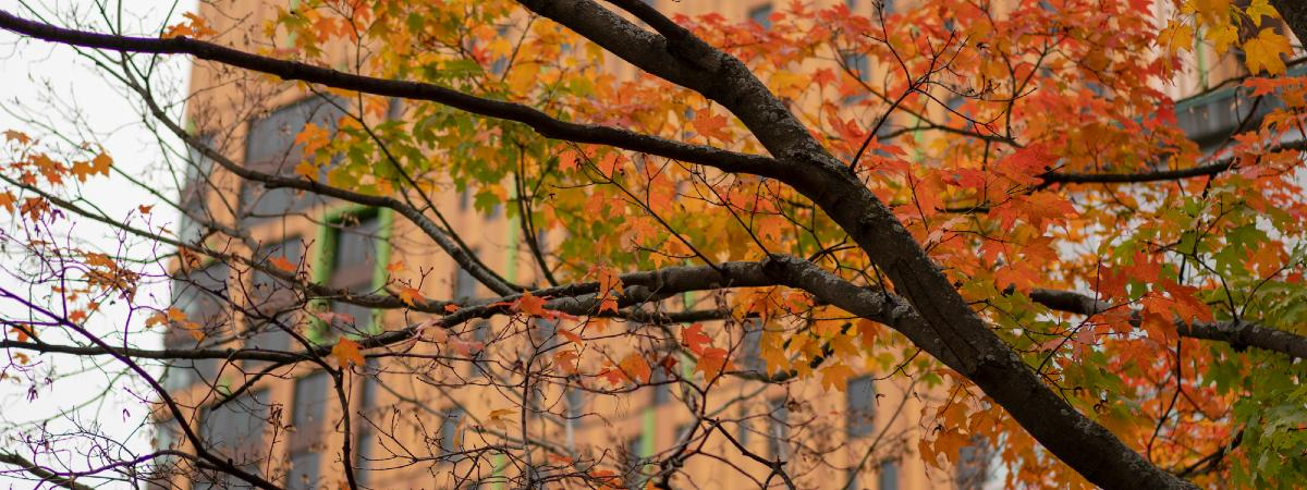 Cropped Fall leaves on a tree in front of MassArt Treehouse