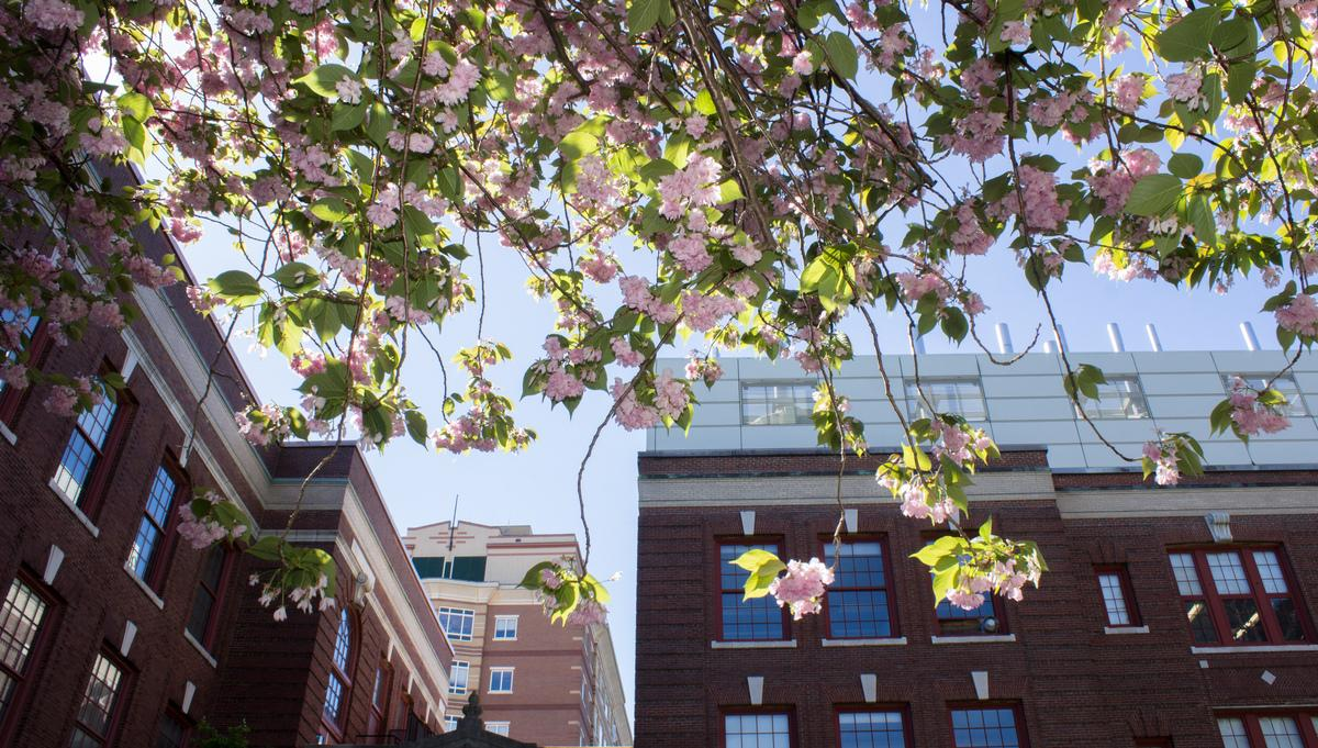 Spring at MassArt, photo by Emma Odell '21 BFA Photography