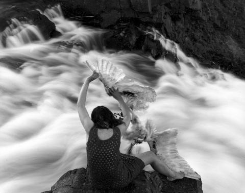 """Swan Wings"" photograph by Agnieszka Sosnowska 2013"