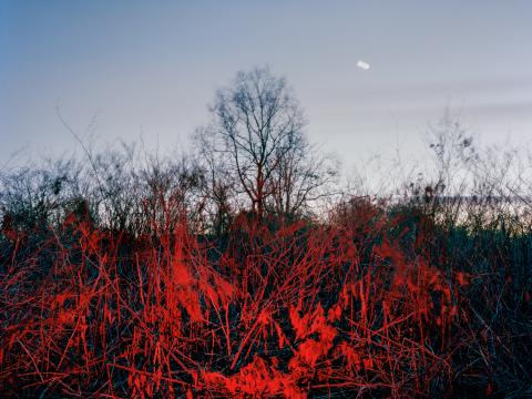 Red Dusk by Caterina Maina