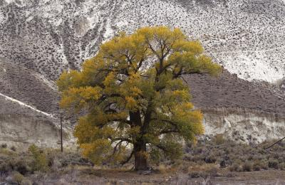 "Laura McPhee's ""Cottonwood Under Chalk Bluff by the Truckee River, Washoe County, Nevada."""